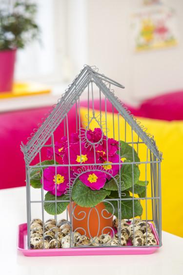 Ett litet dekorationsdrivhus fungerar fint som inramning. Foto: Floradania