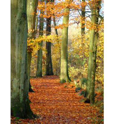 I kanten av bokskogen är det inte måttliga mängder löv. Foto: Katarina Kihlberg