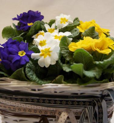 Jordviva i korg. Foto: Blomsterfrämjandet.