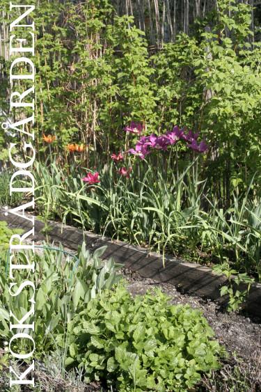Samodla blommor, örter och grönsaker