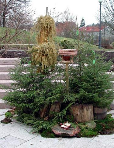 Julgranarnas sista tjänst som fågelrestaurang Foto: Sylvia Svensson