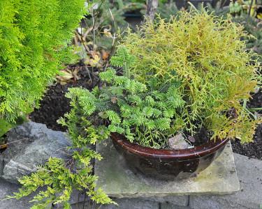 En flera år gammal plantering med småplantor. Dags att plantera om.