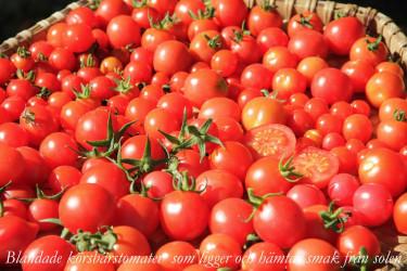 Använd dig gärna av solvärmen för att torka tomaterna till Solkyssta trädgårdspärlor.