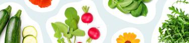 Kryddfröer