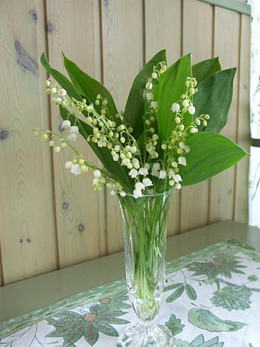I maj blommar liljekonvaljerna. Foto: Sylvia Svensson