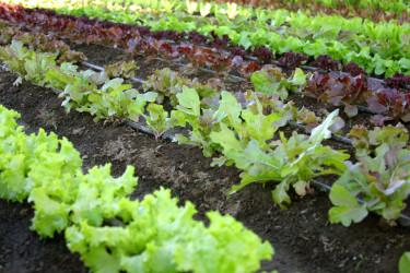 Omväxling förnöjer i grönsakslandet.