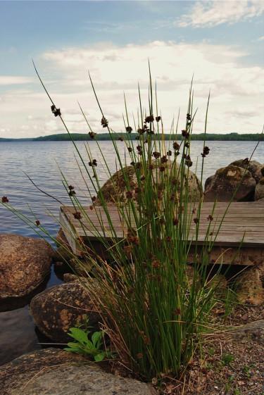 Närheten till vatten gör att du har ett försprång när naturträdgården ska skapas.