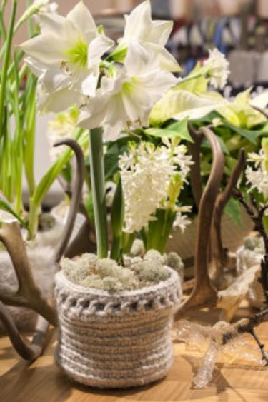 Vit amaryllis med renhorn som dekoration. Foto: Blomsterfrämjandet/Anna Skoog