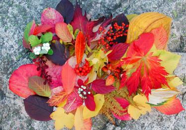 En salig blandning av lysande höstlöv.  Foto: Sylvia Svensson