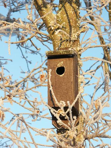Kolla fågelholkarna och sätt upp nya. Foto: Sylvia Svensson
