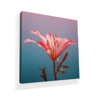 Waterproof Canvas Prints