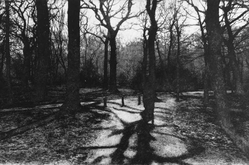 Teresa Schippel Hales, Highgate Woods, Photo Etching, Edition of 50, 18x11.5 cm, Unframed: £70, 2017.