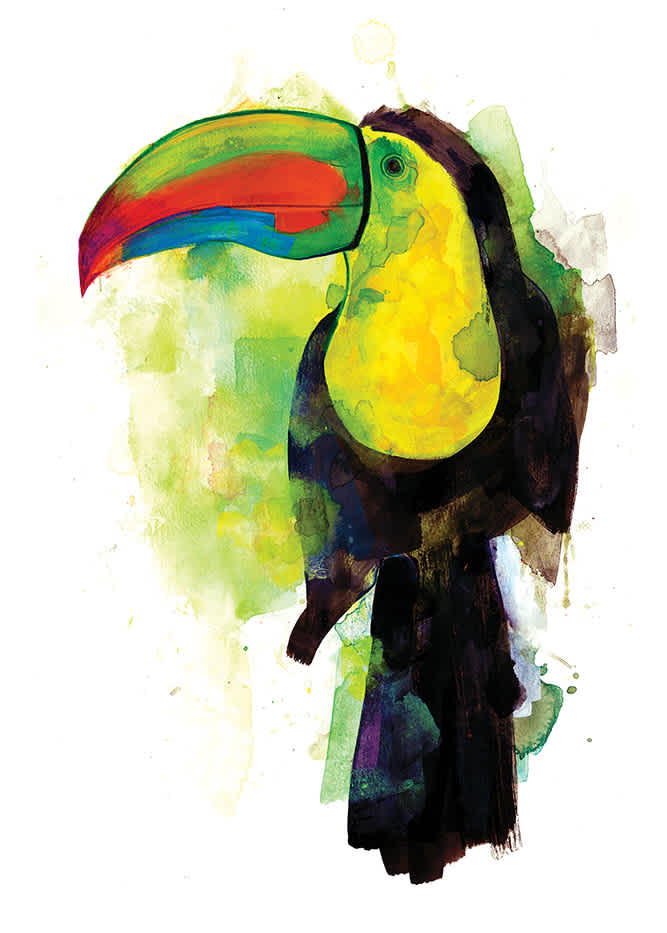 Gavin Dobson, Toucan, Screen print, Edition of 100, 50x70cm, Framed: £325, Unframed: £180, 2019