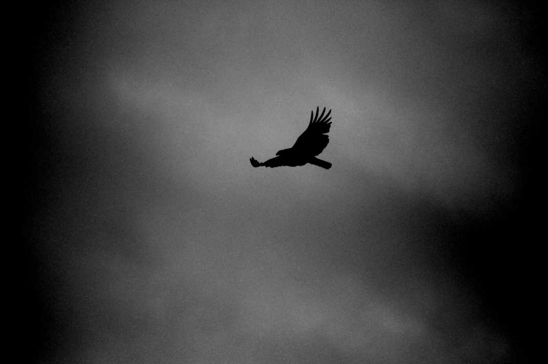 Bird flying in a dark sky.