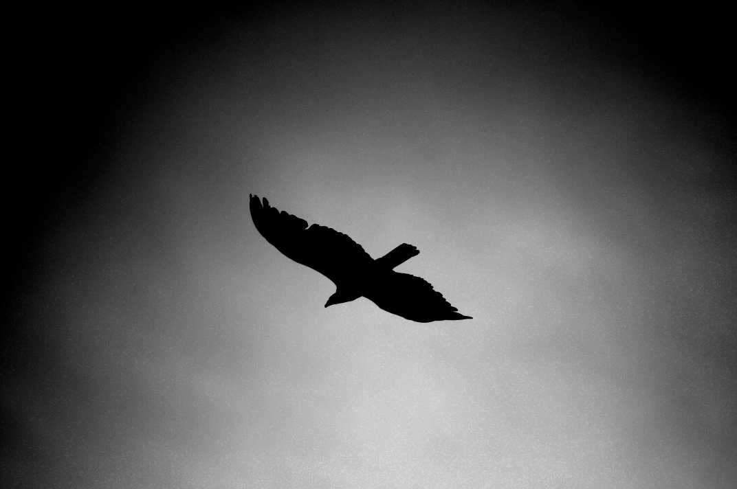 Silhouette of a bird flying in a dark sky.