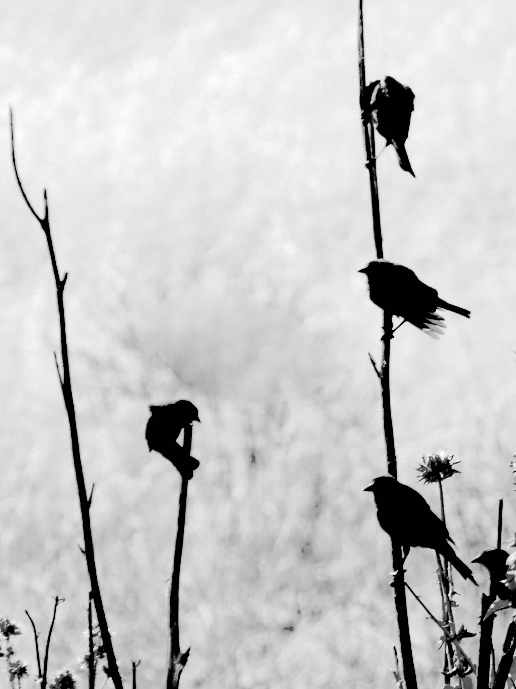 Birds standing on thin branches of a tree.