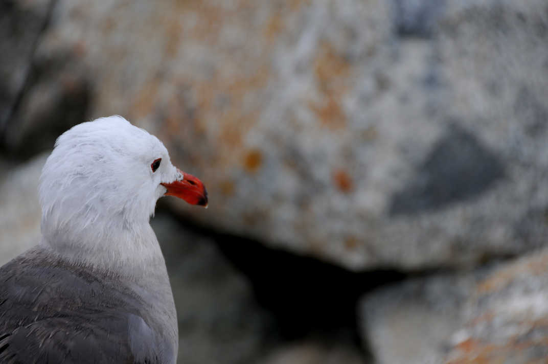 White bird looking at boulders.