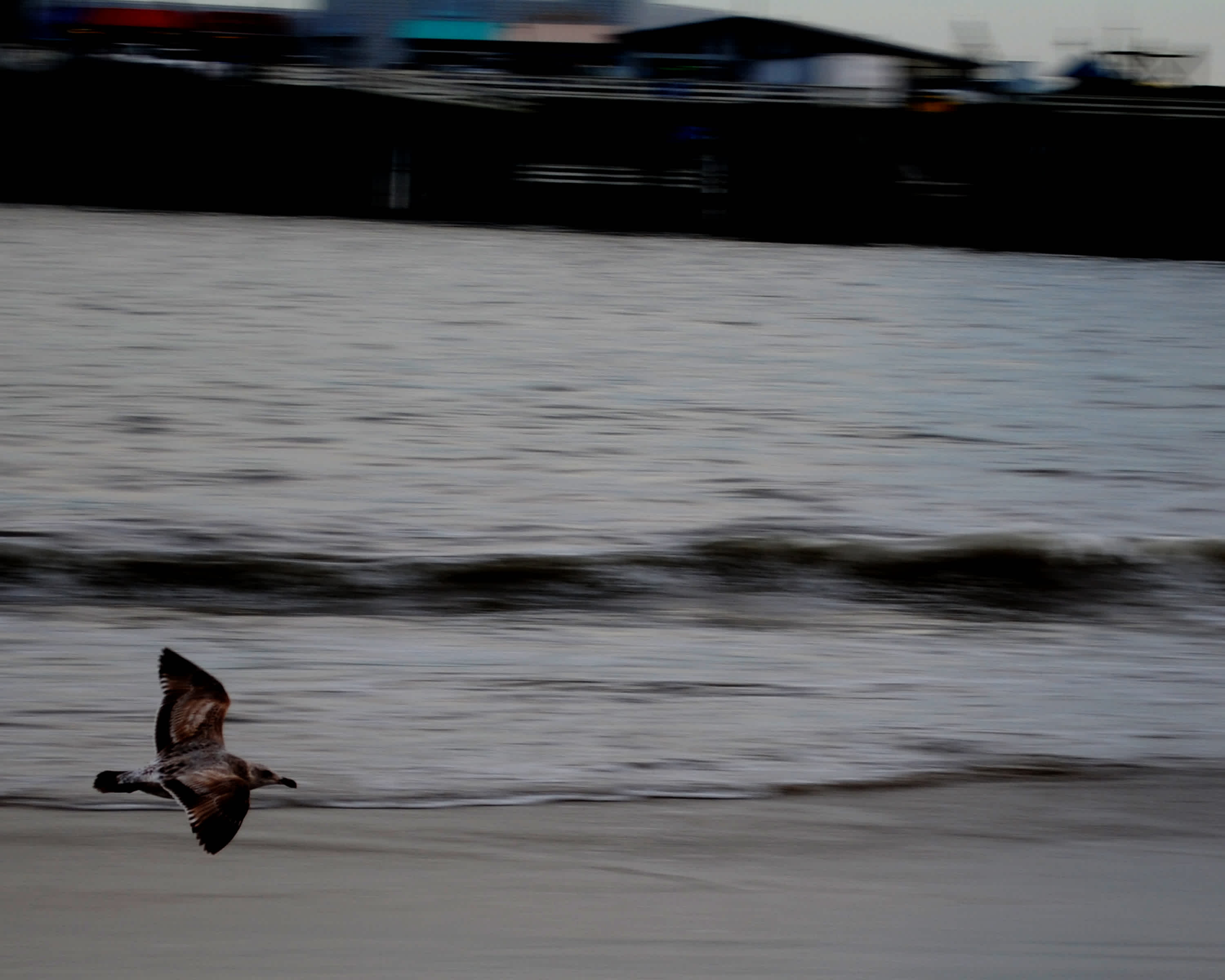 Bird flying past the ocean and pier.