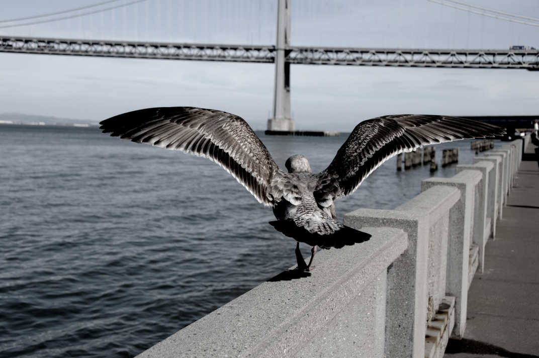 Bird flapping wings on the railing of a pier.