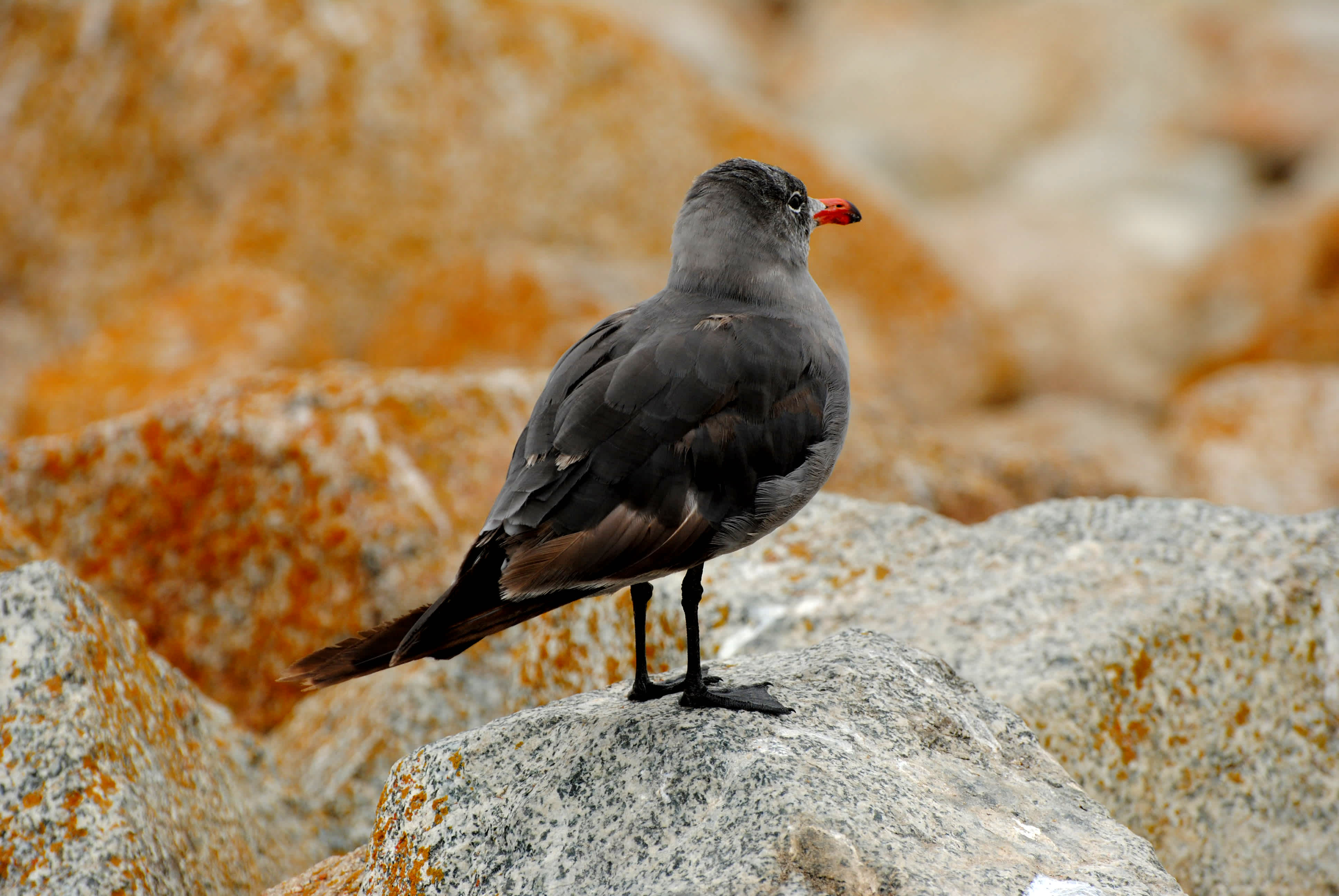 Bird standing on a rock.