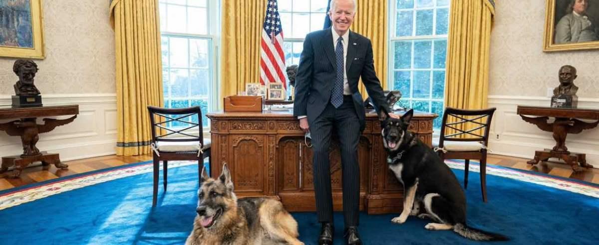 Joe Biden razem z psami