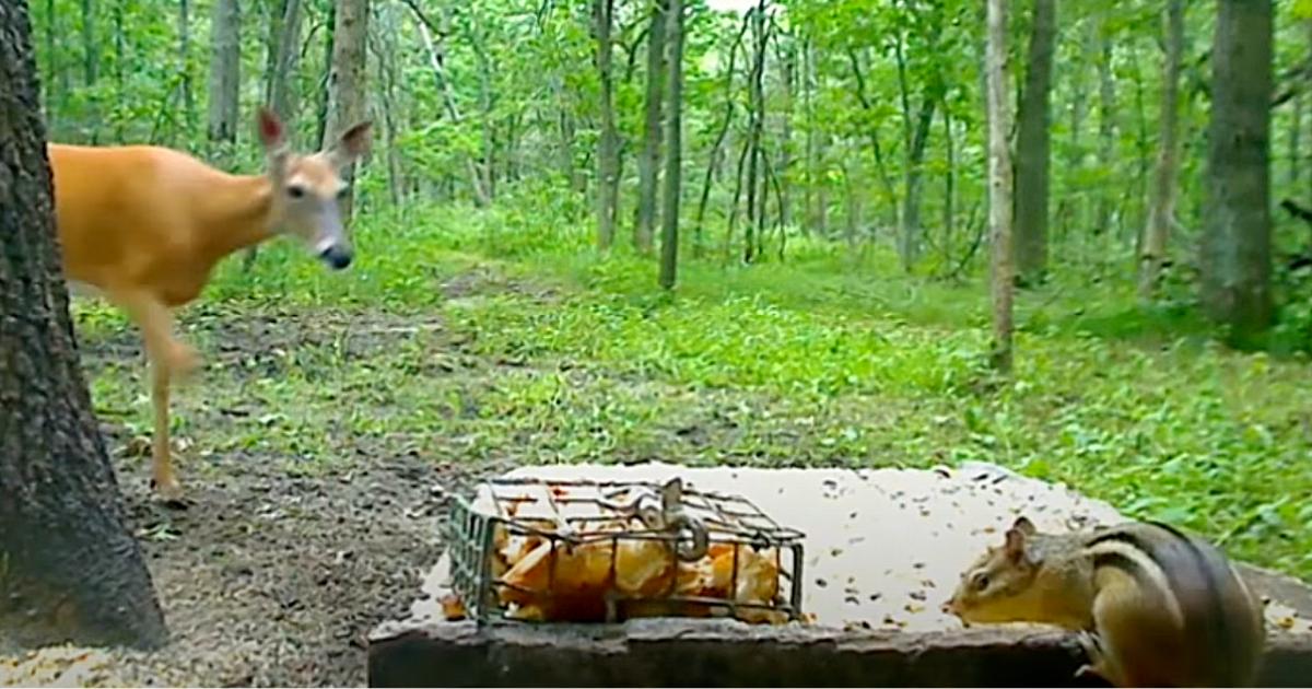 Wyżerka w lesie