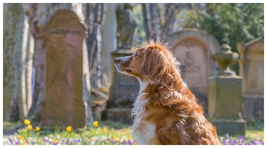 Zdjęcie ilustracyjne: pies na cmentarzu