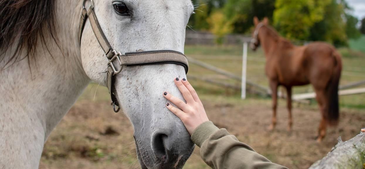 Koń głaskany przez panią
