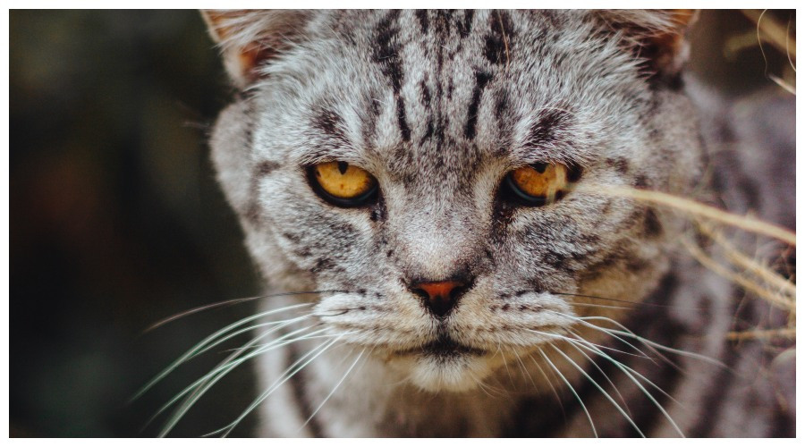 Koty z charakterem