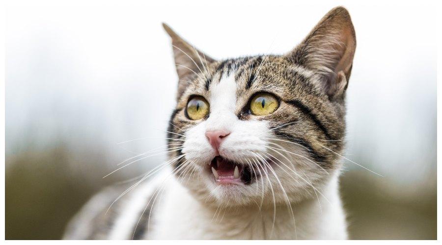 kot w strachu