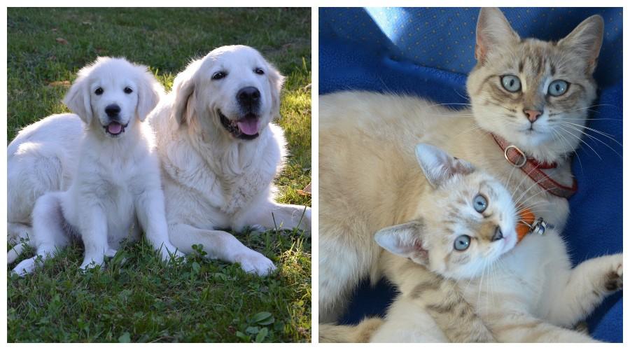 Szczeniaki i kotki z mamami