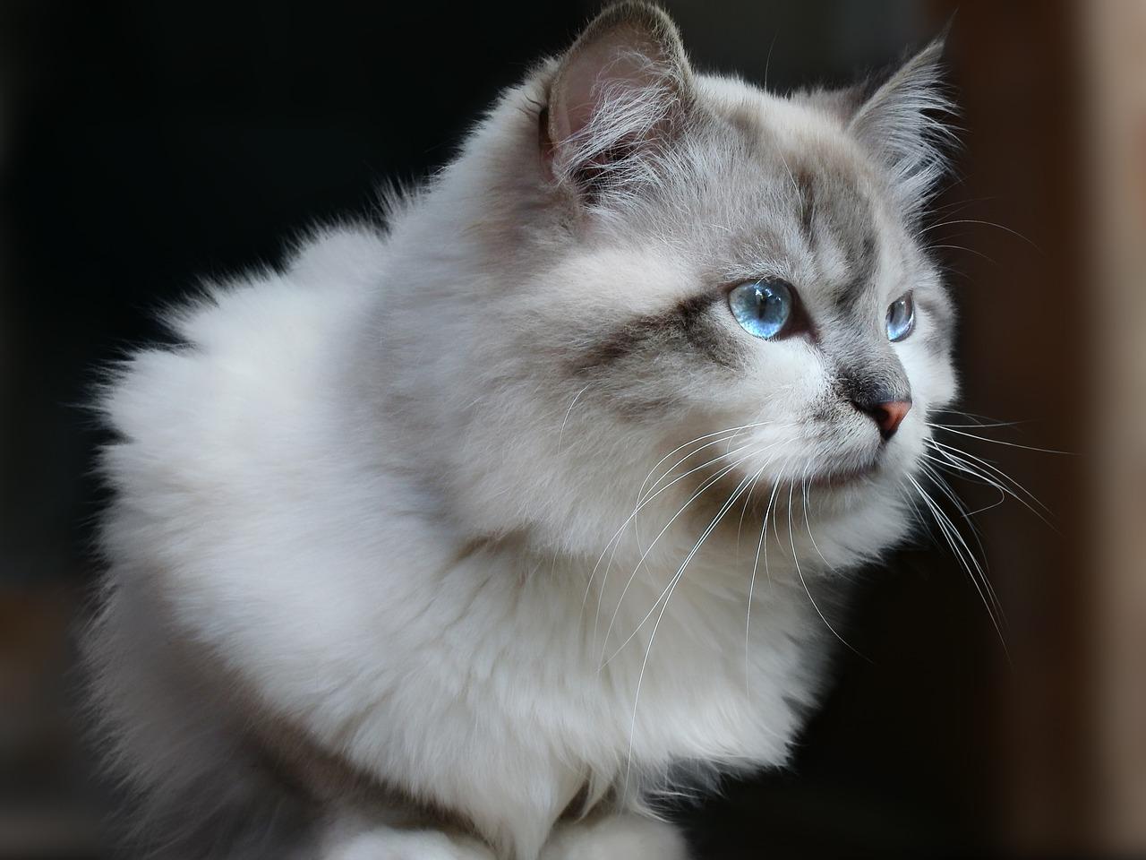 Nadczynność tarczycy u kotów – jakie są objawy i jak leczyć?