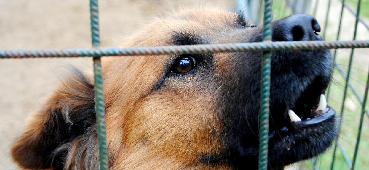 Pomóż Fundacji uratować życie zwierząt
