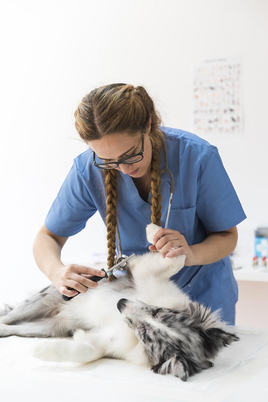 Kastracja psa – jak wygląda, jak się do niej przygotować i kiedy należy ją wykonać?