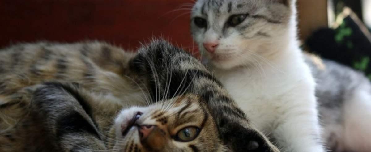Kot duży i mały - jak je pogodzić
