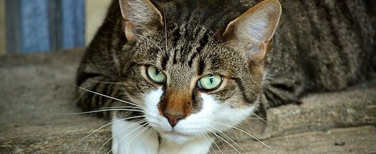 Czym jest podszerstek u kota?