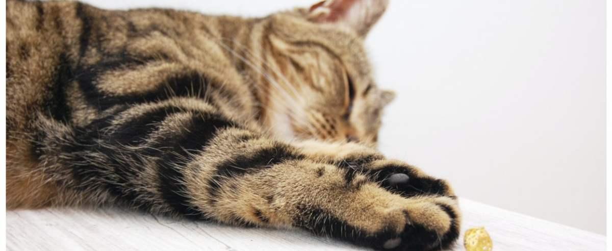 Zdjęcie podglądowe - kot