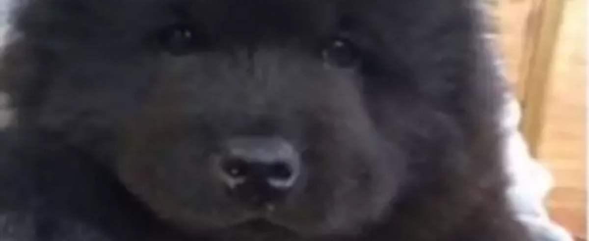 Pies wzbudził panikę weterynarza