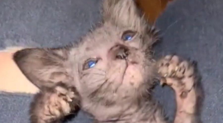 tiktok/graciewolfcat