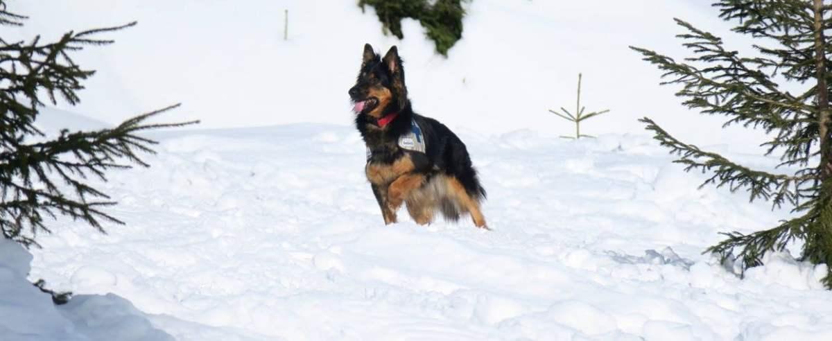 Kobieta z psem na śniegu, GOPR