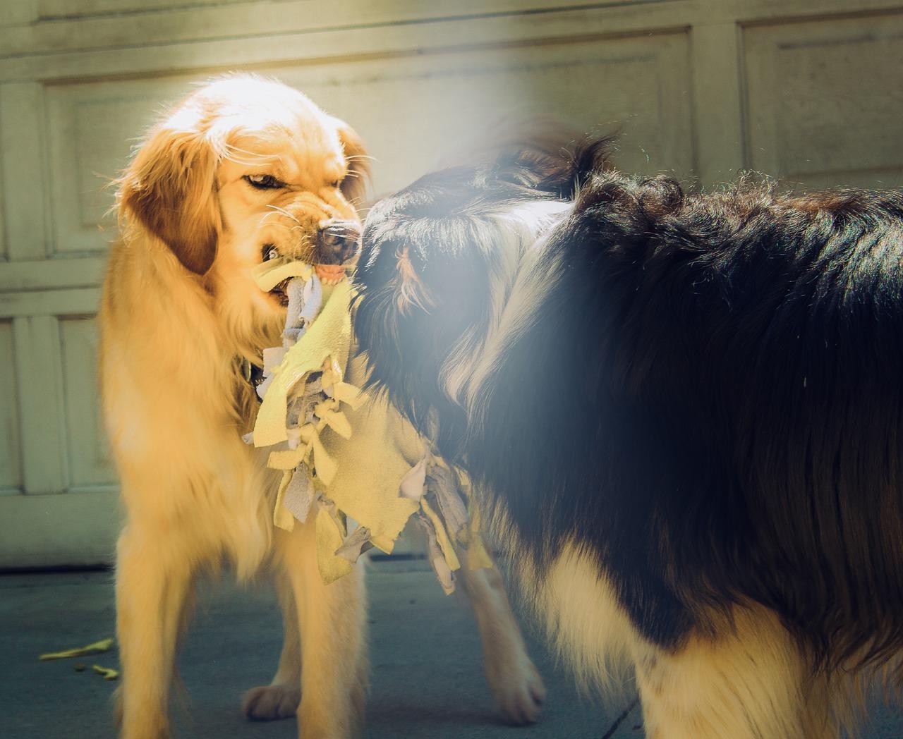 Wścieklizna u psa – objawy, leczenie, postępowanie