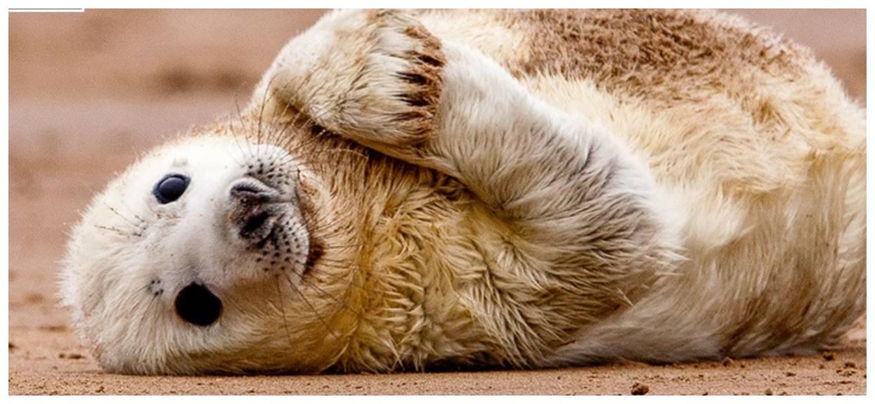 Zdjęcia wykonane przez Błękitny Patrol WWF