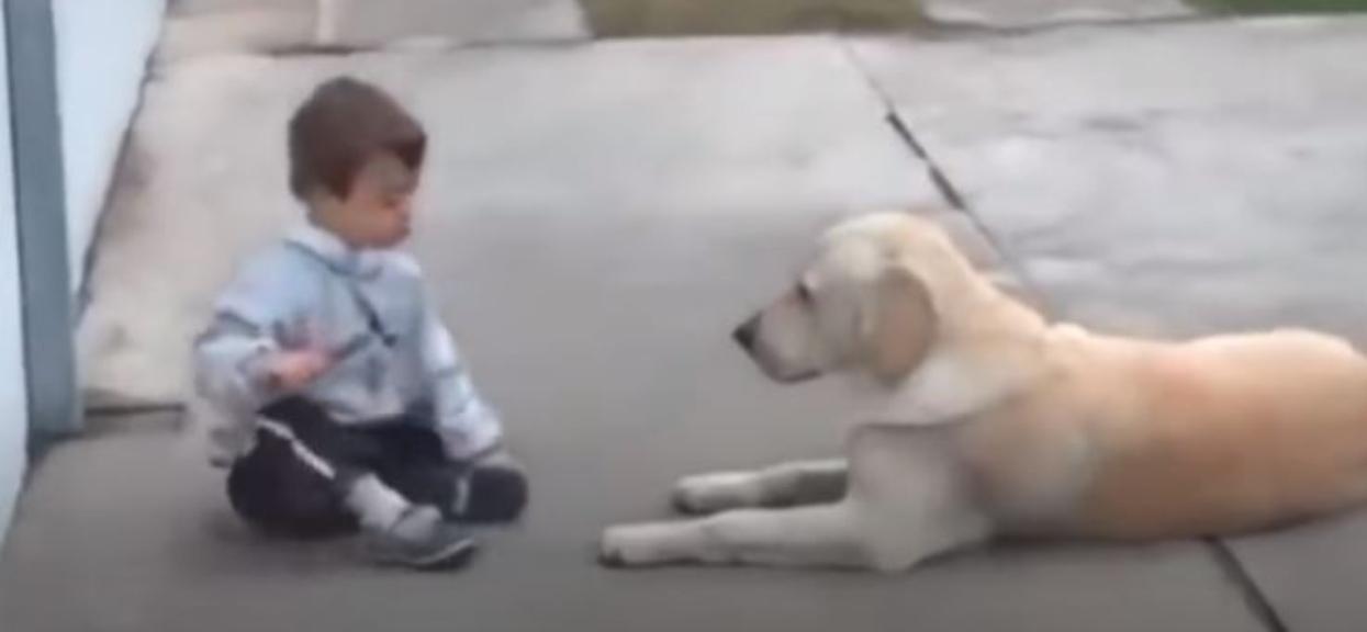 labrador i chłopiec