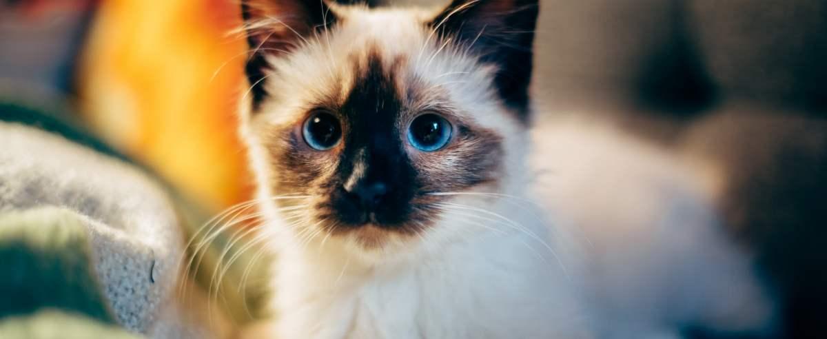 Zdjęcie podglądowe - kotek