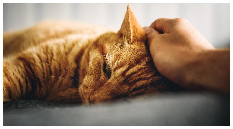 Zdjęcie ilustracyjne: chory kot