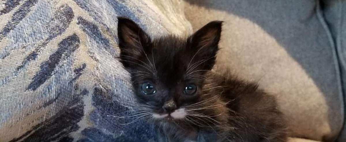 kotek wielkości łyżki