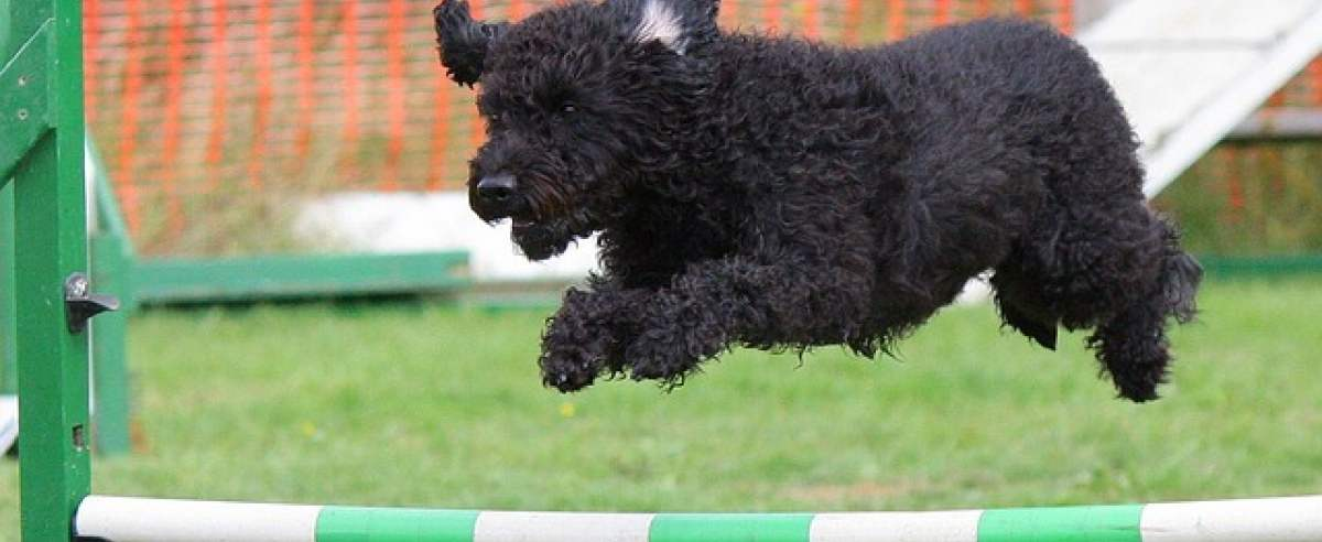 Agility – na czym polega ten psi sport i jak zacząć go uprawiać