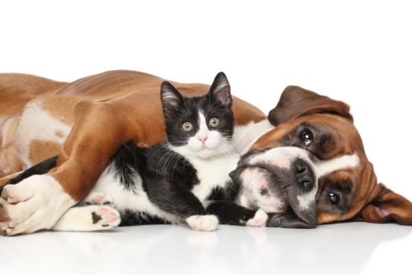robaki u kotów