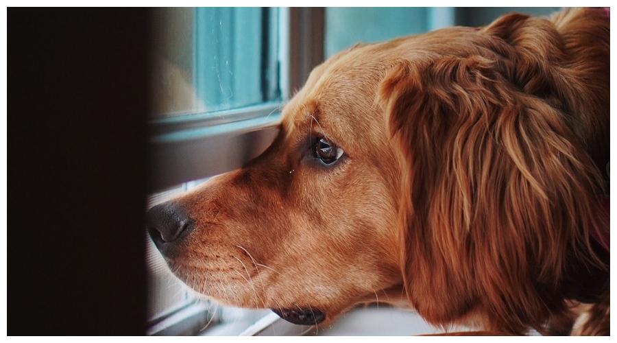 pies boi sie burzy
