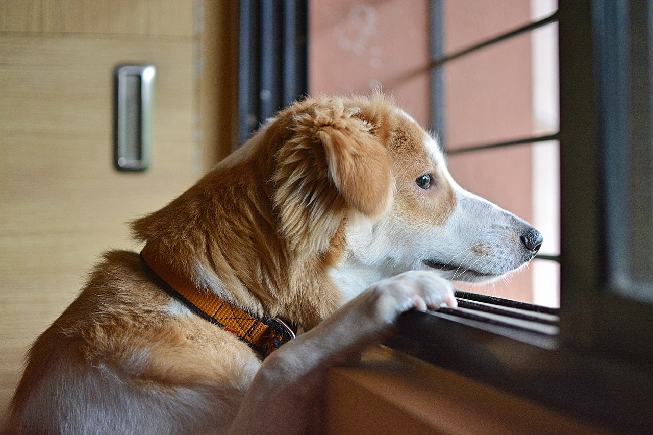 Pies sam w domu – jak go do tego przyzwyczaić?